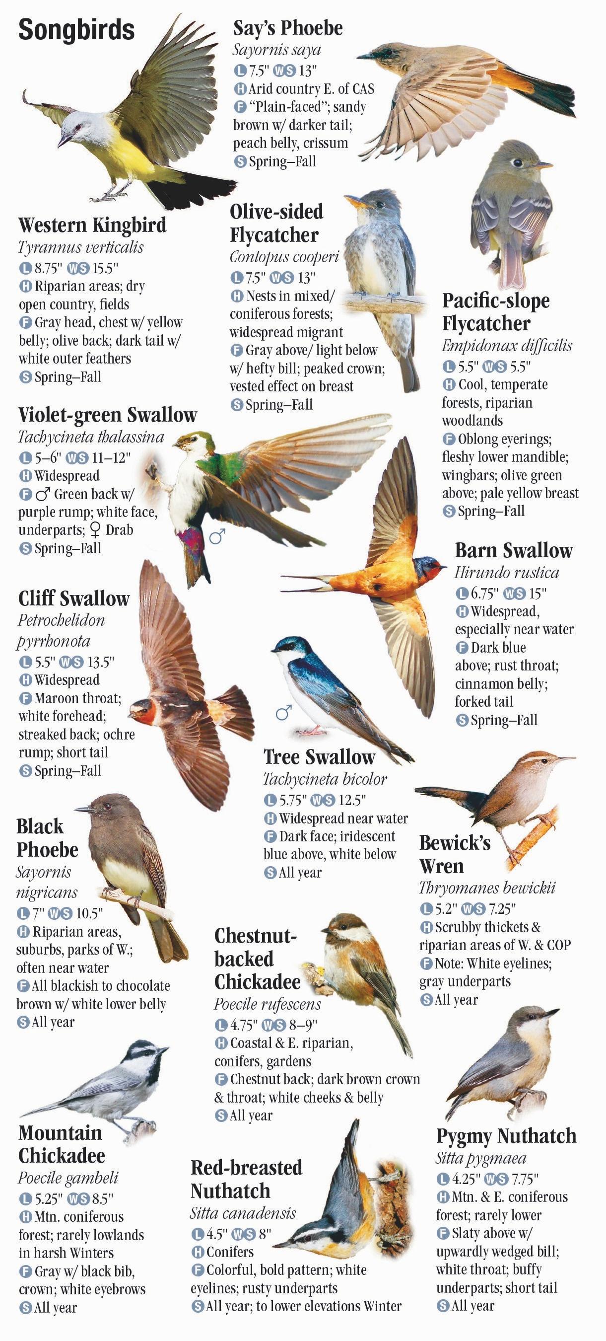 Birds Of Washington Quick Reference Publishing