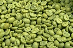 פולי קפה ירוק