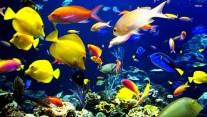 Thinking Of Keeping Tropical Fish
