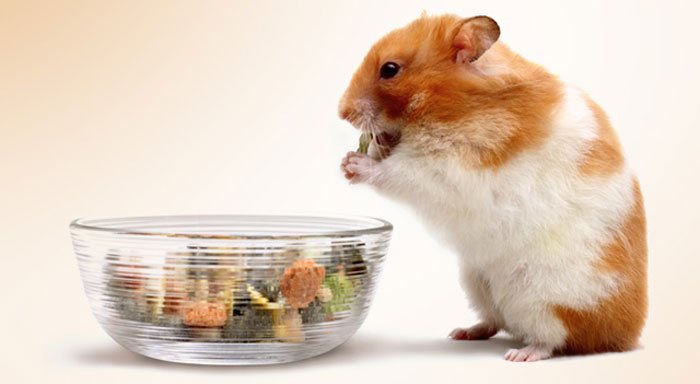 What Foods Can Hamsters Eat Yahoo | Food