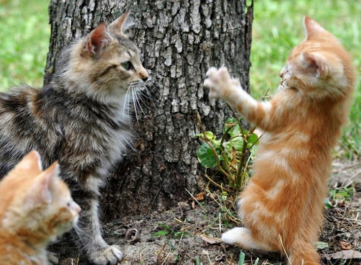 Are Your Cats Playing Or Fighting?