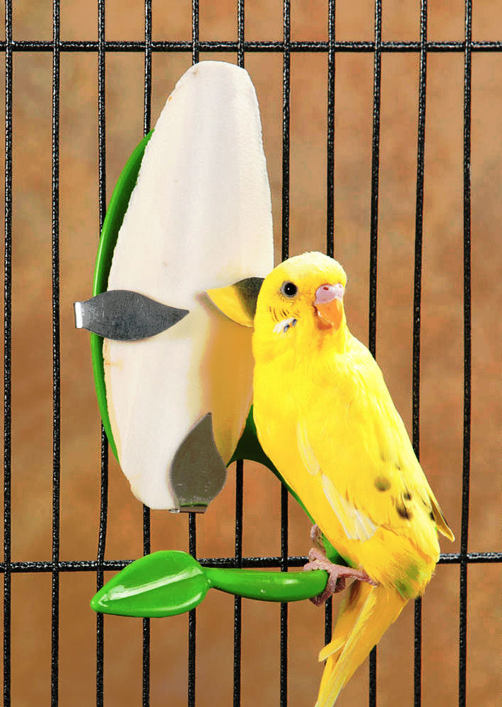 Does My Bird Really Need A Cuttlebone?