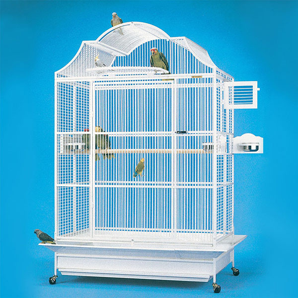 How to Choose a Proper Bird Cage