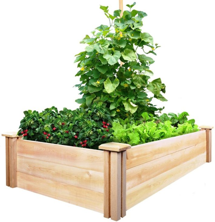 Vegetable Gardening with Raised Beds (11)