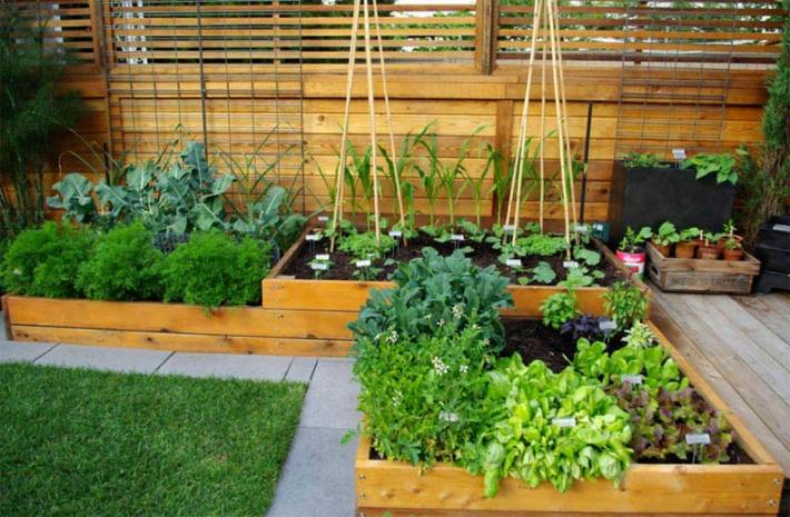 Vegetable Gardening with Raised Beds (7)