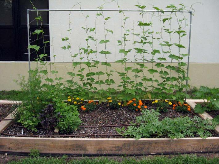Vegetable Gardening with Raised Beds (8)