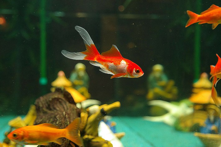 Stress in Fish – Learn Symptoms and Help Your Fish