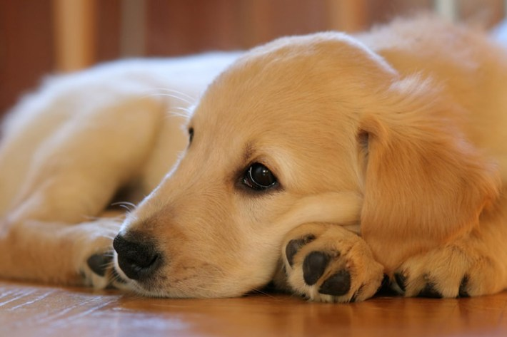 Reasons Why Your Dog May Have A Dry Nose
