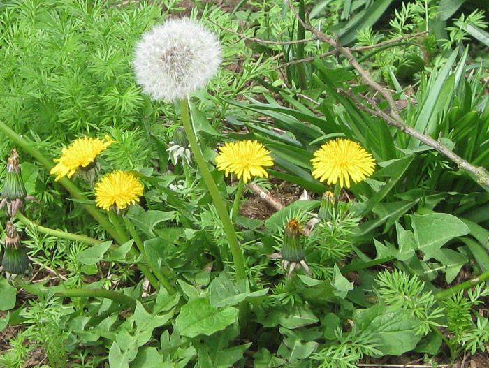 Vegetable Garden - Planning, Designing and Growing