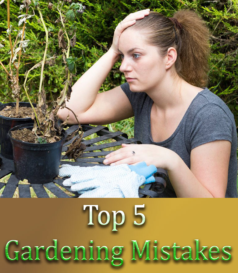 Top 5 Gardening Mistakes - Quiet Corner