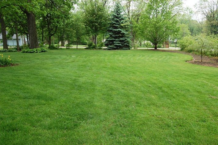 Common Lawn Weeds – How to Handle them