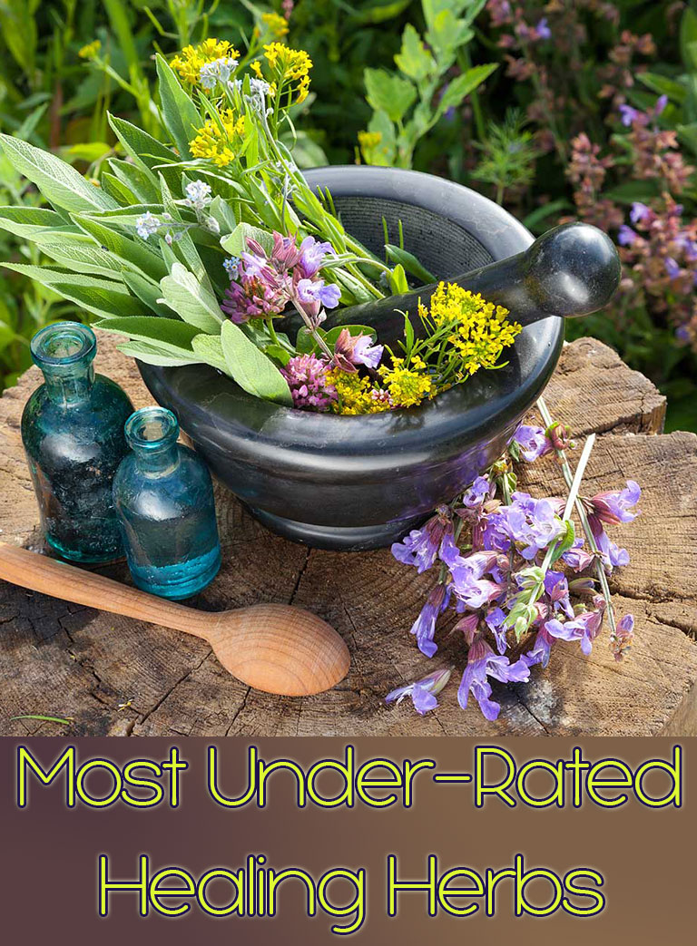 Most Under-Rated Healing Herbs - Quiet Corner