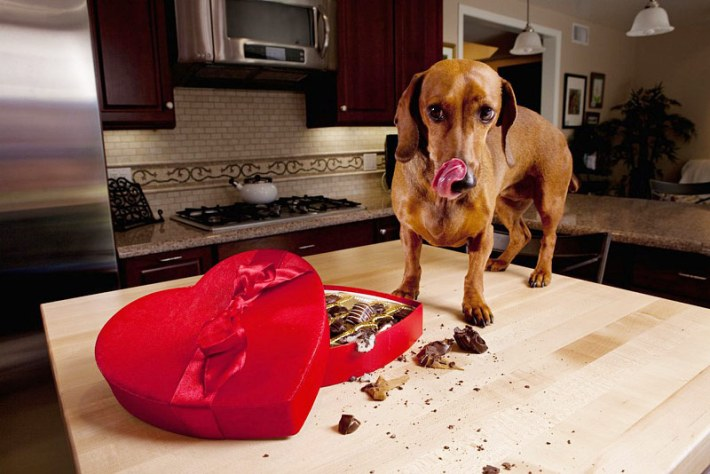 What Foods Can Cause Seizures In Dogs