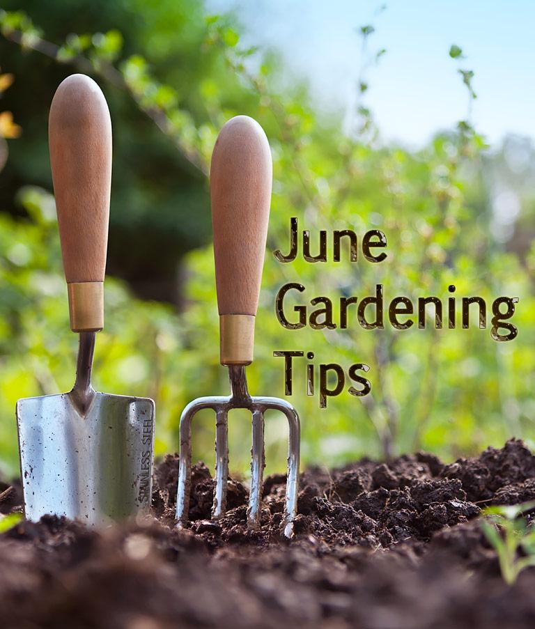Quiet Corner Container Gardening Ideas: Quiet Corner:June Gardening Tips