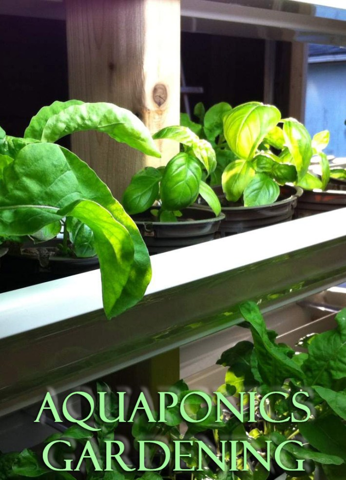 What is Aquaponics Gardening?