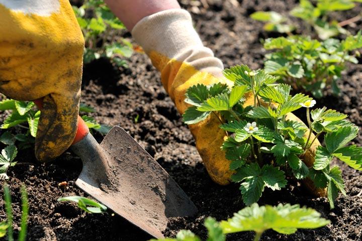 Planting Arrangements - Quiet Corner