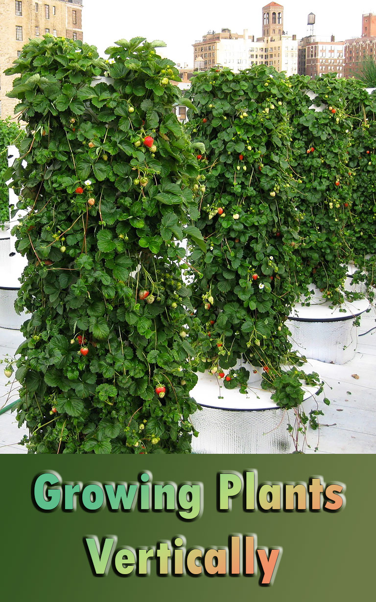 Growing Plants Vertically - Quiet Corner