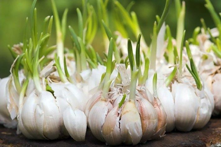 10 Plants You Can Re-Grow From Vegetable Scraps