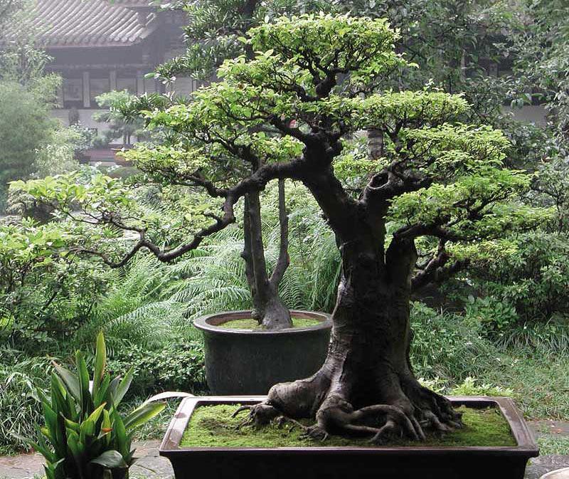 Japanese Gardens Design - Quiet Corner