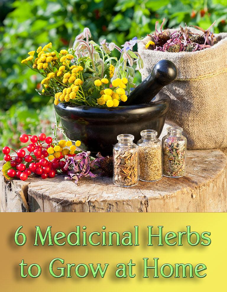 6 Medicinal Herbs to Grow at Home - Quiet Corner