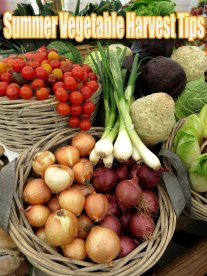 Summer Vegetable Harvest Tips
