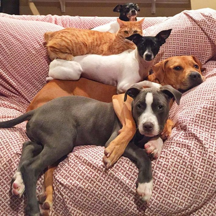 This Couple Rescued 7 Animals And This Is How They Live Now