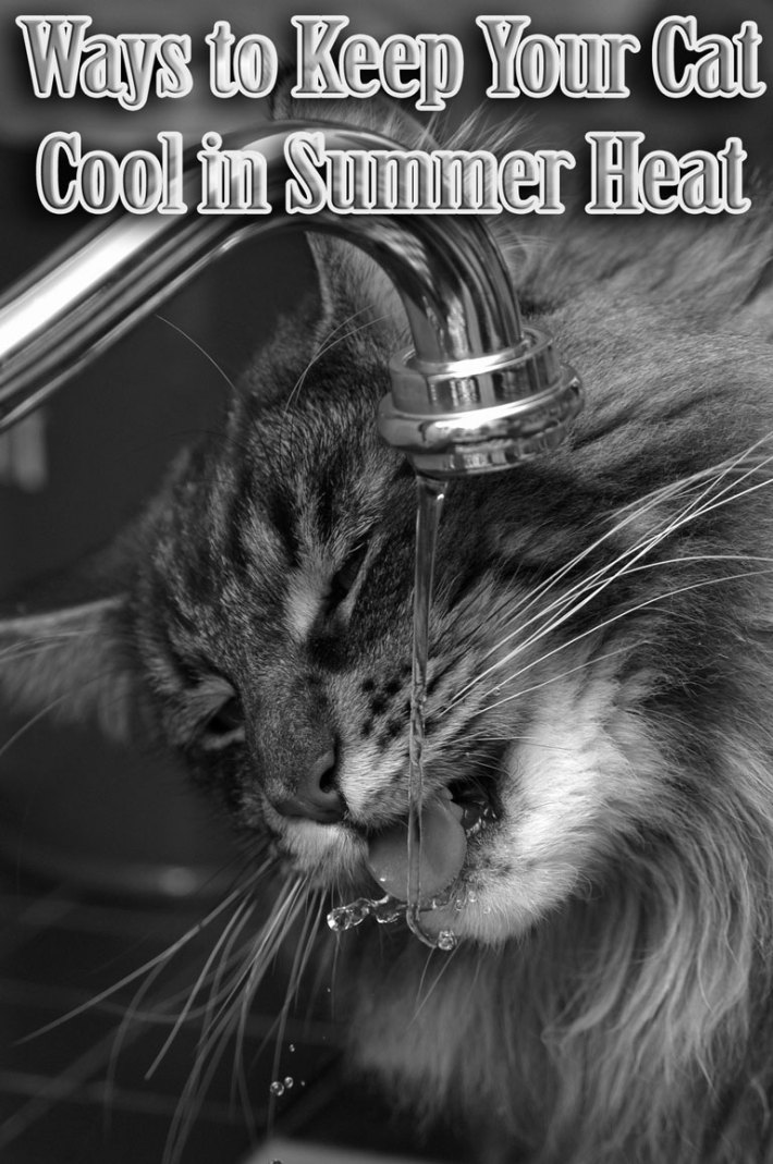 Ways to Keep Your Cat Cool in Summer Heat