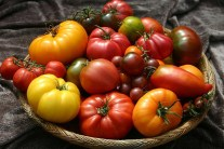 Top 10 Heirloom Tomatoes for the Garden