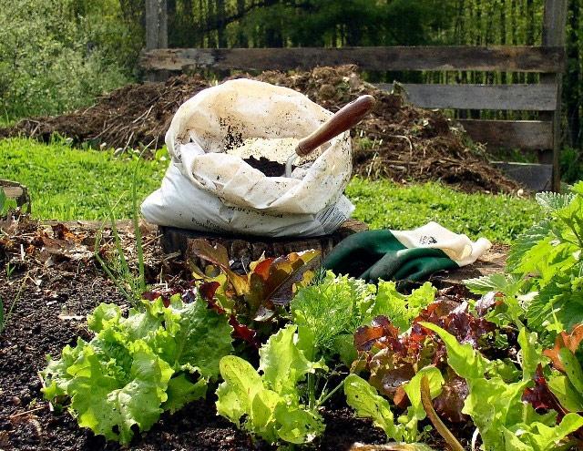 How to Improve Your Garden Soil