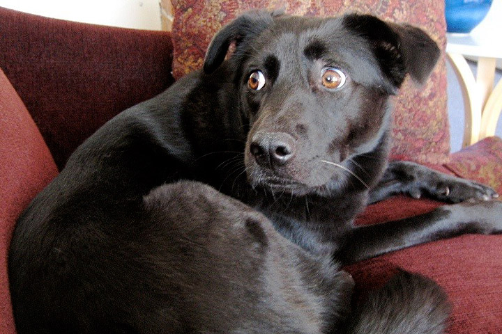 10 Ways to Stress out Your Dog Without Knowing It - Quiet Corner