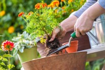 A Handy To-Do List for Gardening in July