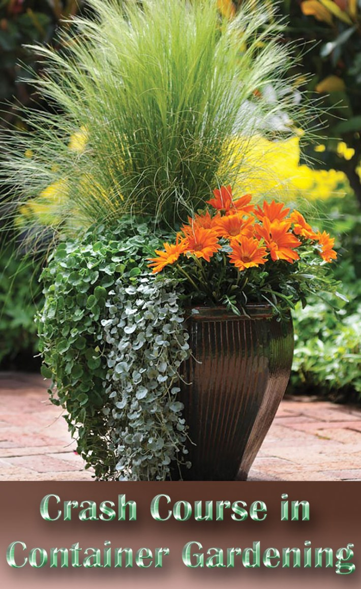 A Crash Course in Container Gardening