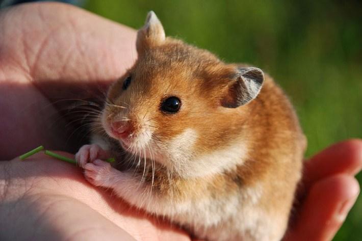 Hamster Cage – Essentials