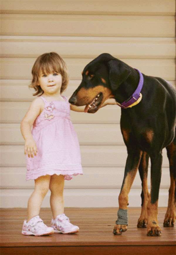 Khan Doberman Saves Toddler From Snake