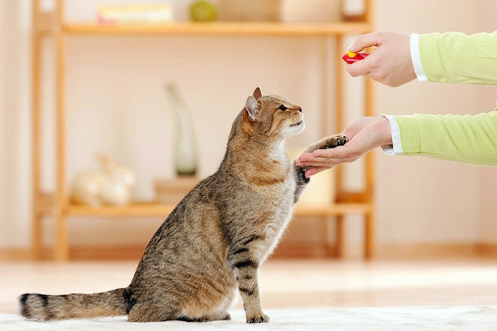 You Want to Change Your Cat's Behavior? – Train Your Cat!
