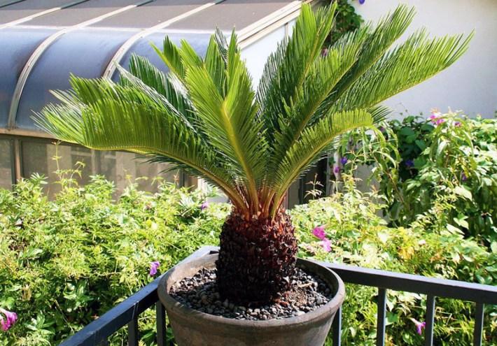 7 Indoor Plants That Are Dangerous to Children & Pets