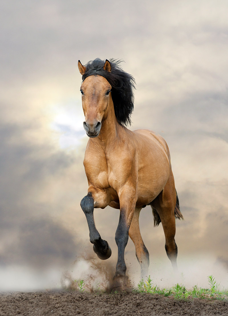 30 Fascinating and Interesting Facts About Horses - Quiet Corner
