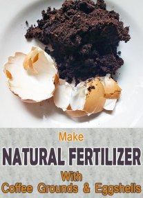 Fertilize Your Plants With Coffee Grounds and Eggshells