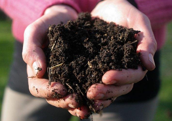 Plant your Organic Garden