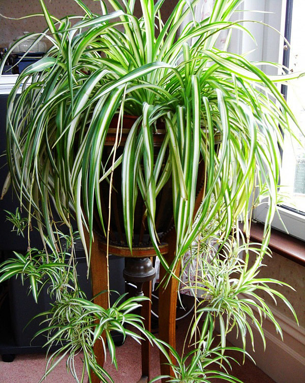 15 Easy to Grow Houseplants For Beginners