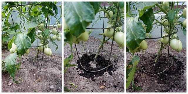 Quiet Corner Fertilize Your Plants With Coffee Grounds And Eggshells Quiet Corner