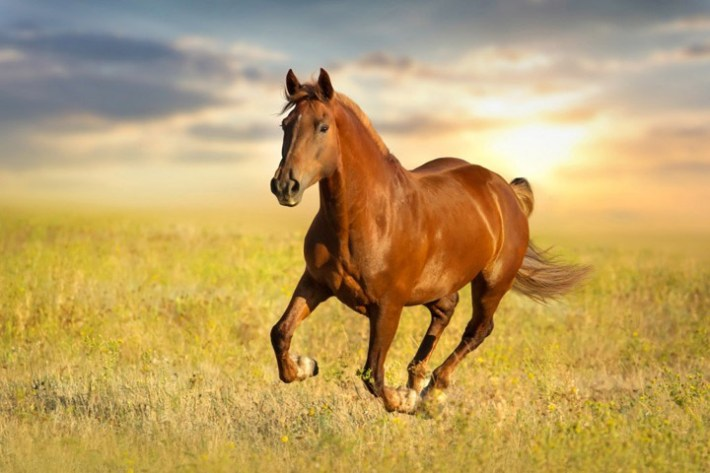 Top 10 Most Famous Horses In The History