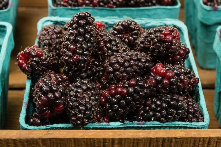 Amazing Health Benefits of Boysenberries