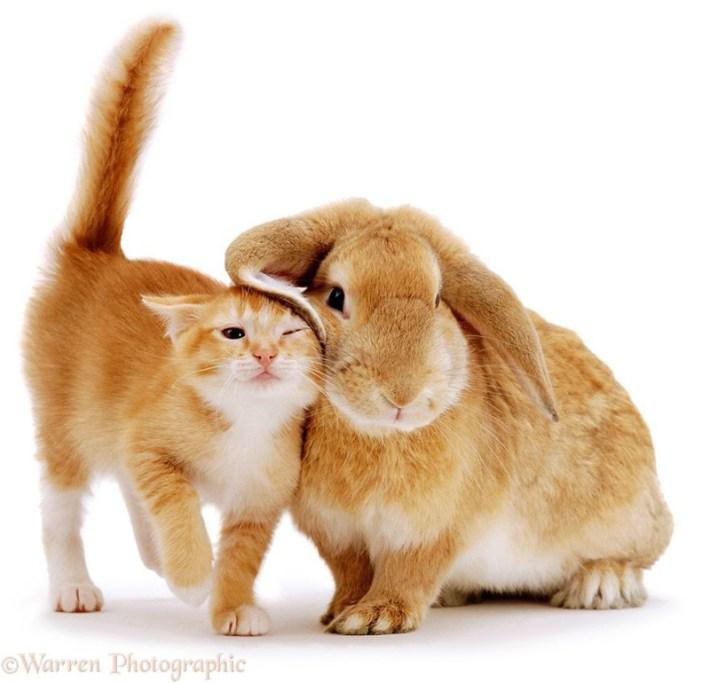 Cuteness Alert! - Cute Portraits of Animal Doppelgangers