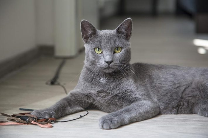 Help Your Cat Live Longer Healthier Life