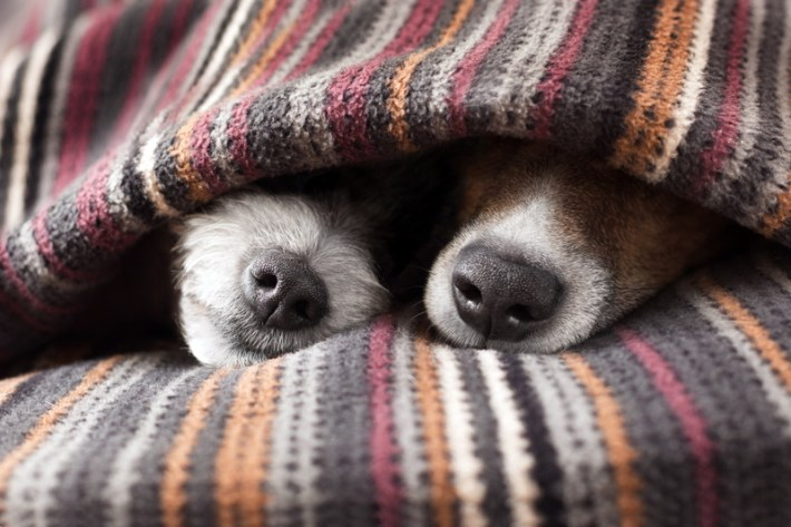 How Dogs are Really Affected by Fireworks
