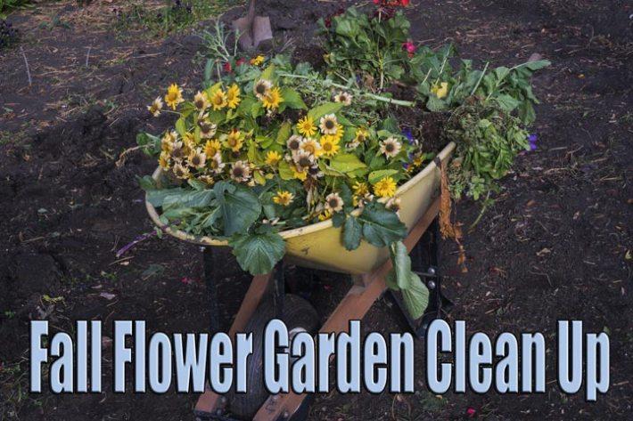 Fall Flower Garden Clean Up