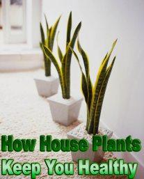 How House Plants Keep You Healthy