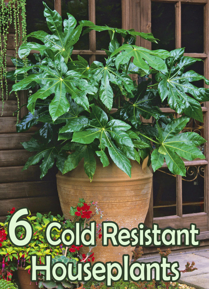 Six Cold Resistant Houseplants