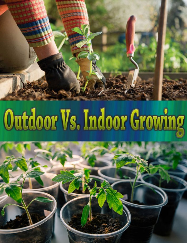 indoor vs outdoor Indoor cats vs outdoor cats like many cat lovers, you may have thought about letting your cat go outside a lot of cat owners feel guilty about keeping their cat inside, and worry that they are depriving their cat of natural instincts or fresh air and sunshine.